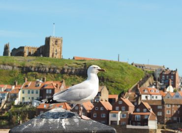 A Day Trip To Whitby